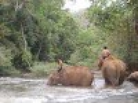 Mondulkiri tours 11 days